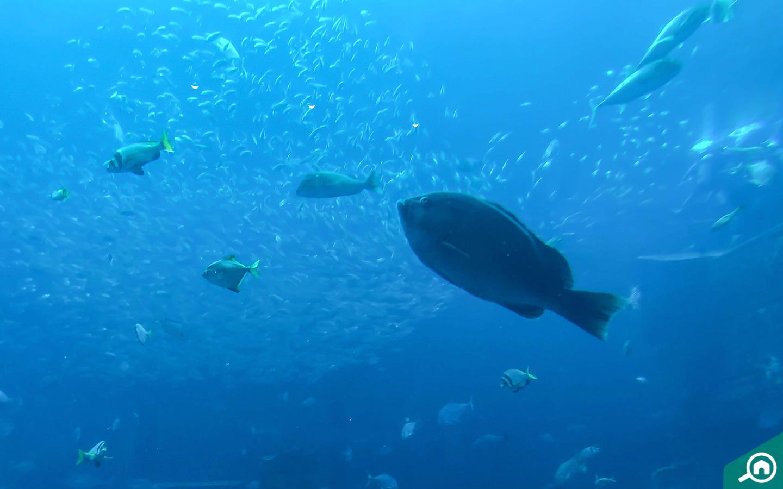 atlantis aquaventure near oceana